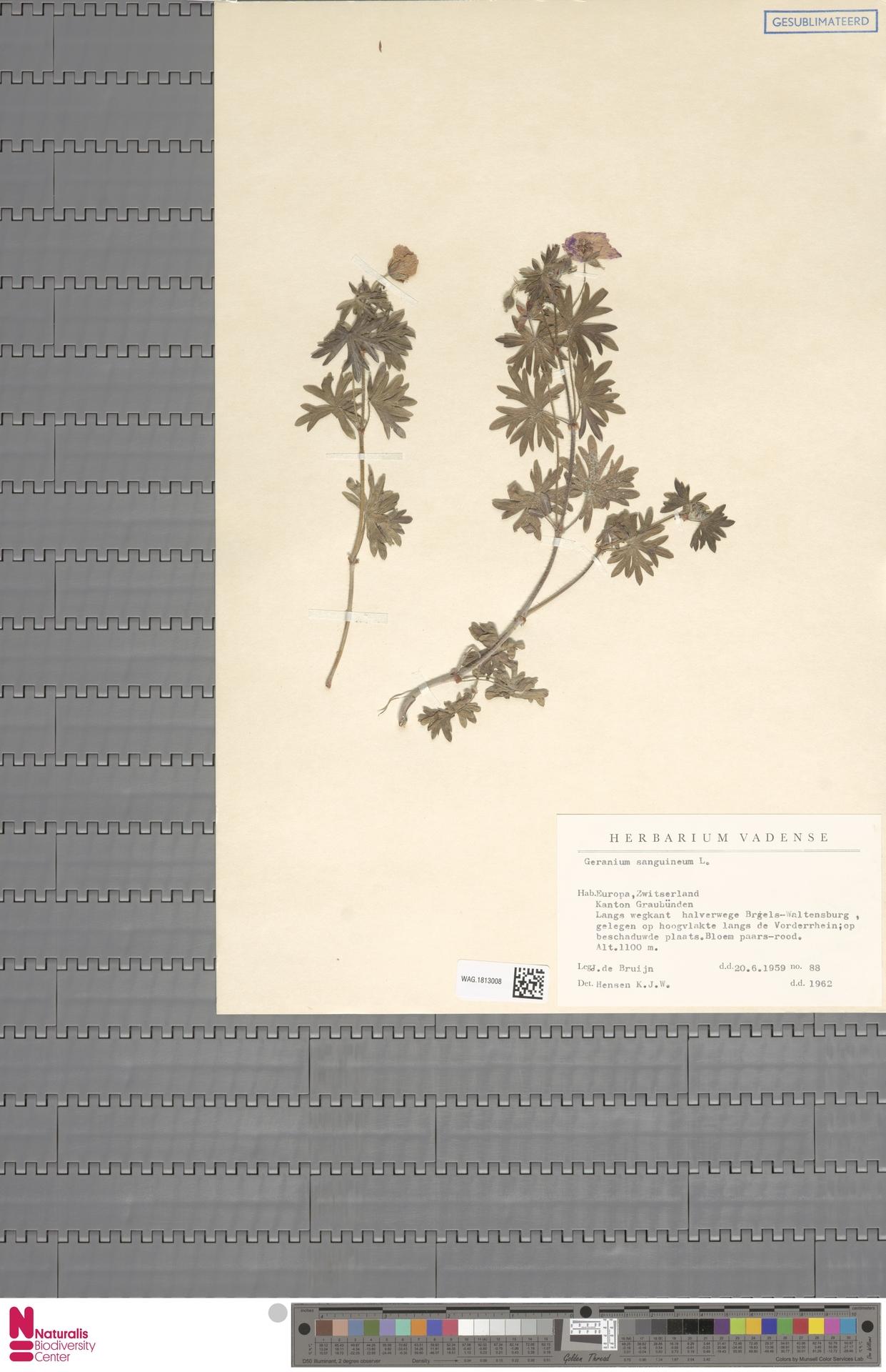 WAG.1813008 | Geranium sanguineum L.
