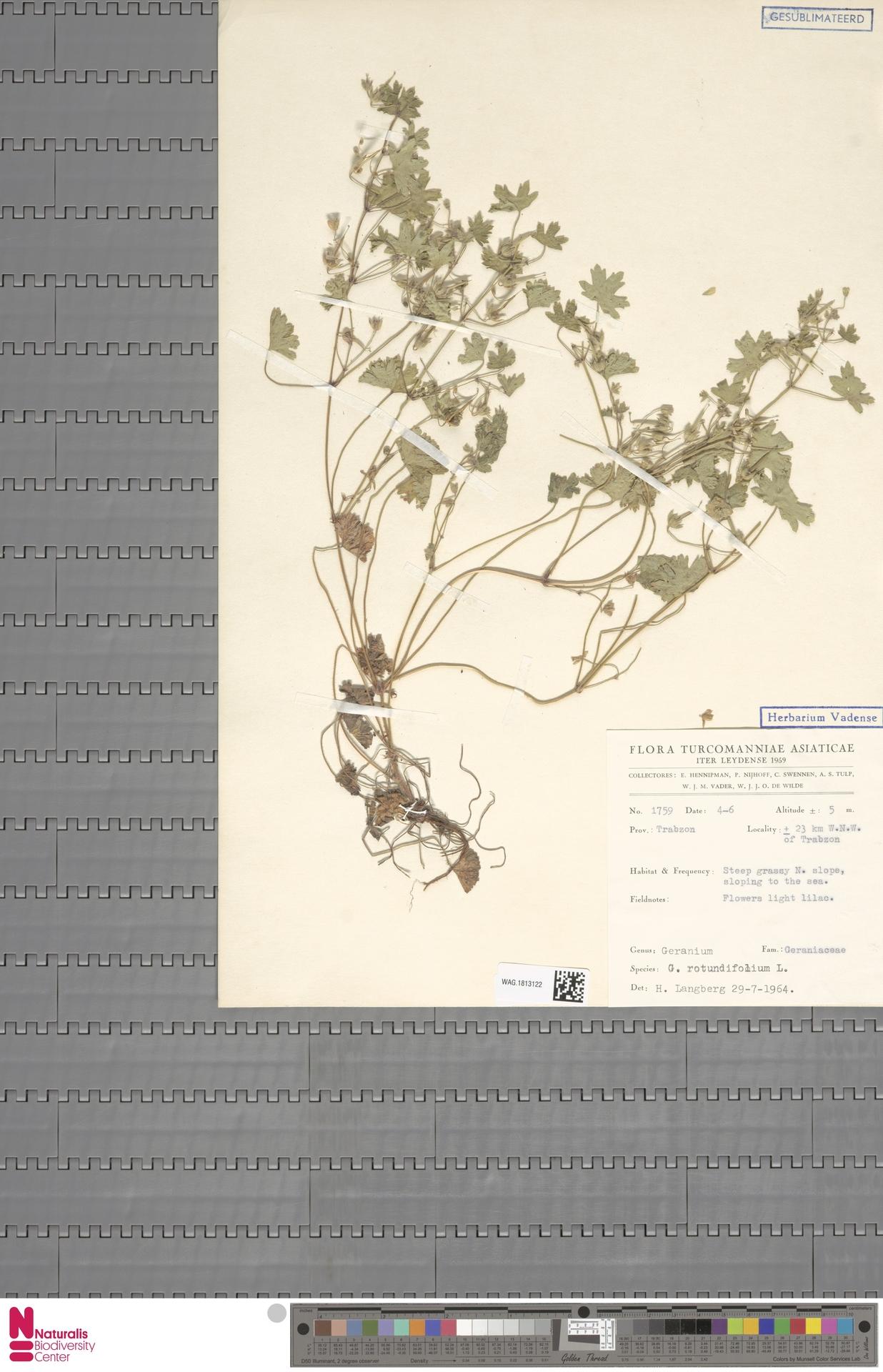 WAG.1813122 | Geranium rotundifolium L.