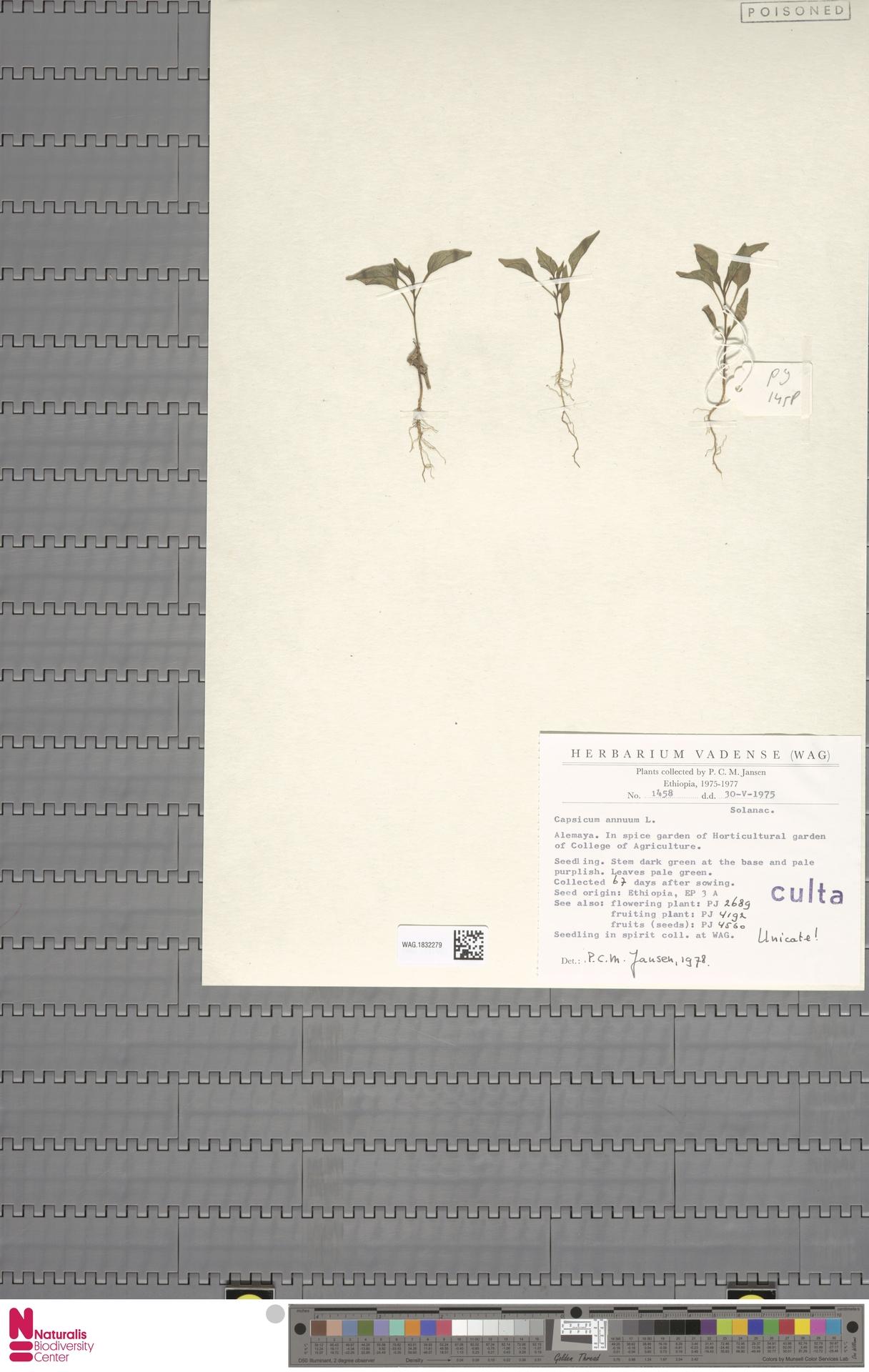 WAG.1832279 | Capsicum annuum L.