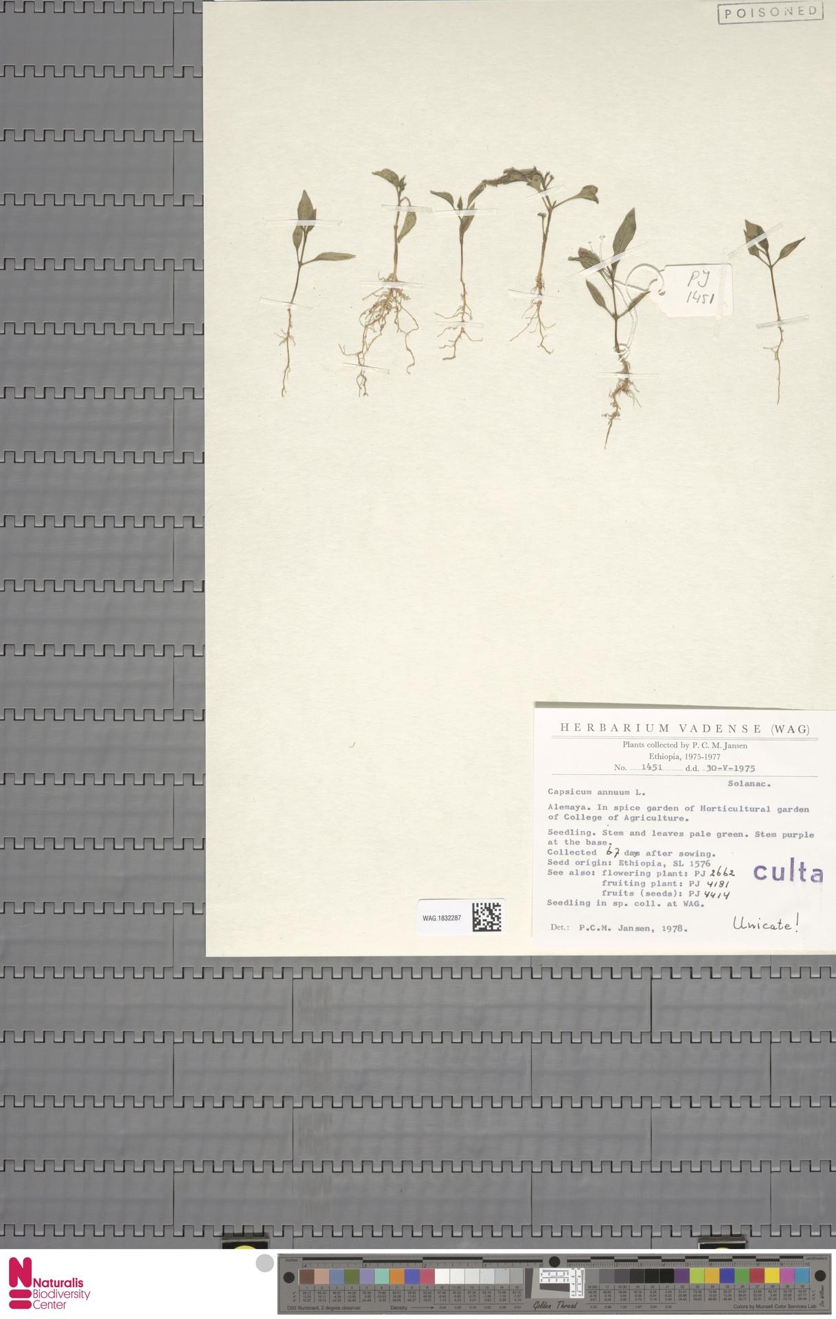 WAG.1832287 | Capsicum annuum L.