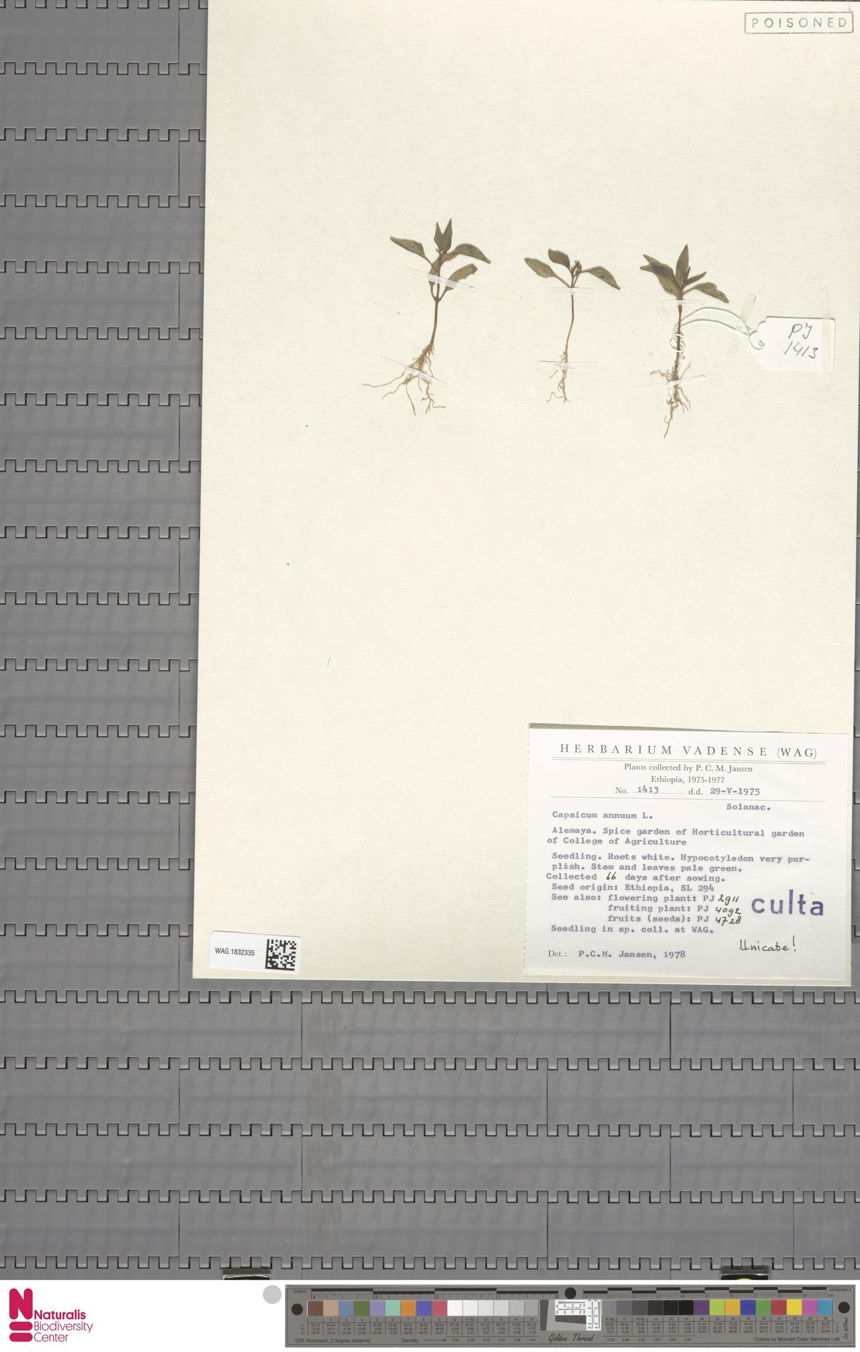 WAG.1832335   Capsicum annuum L.