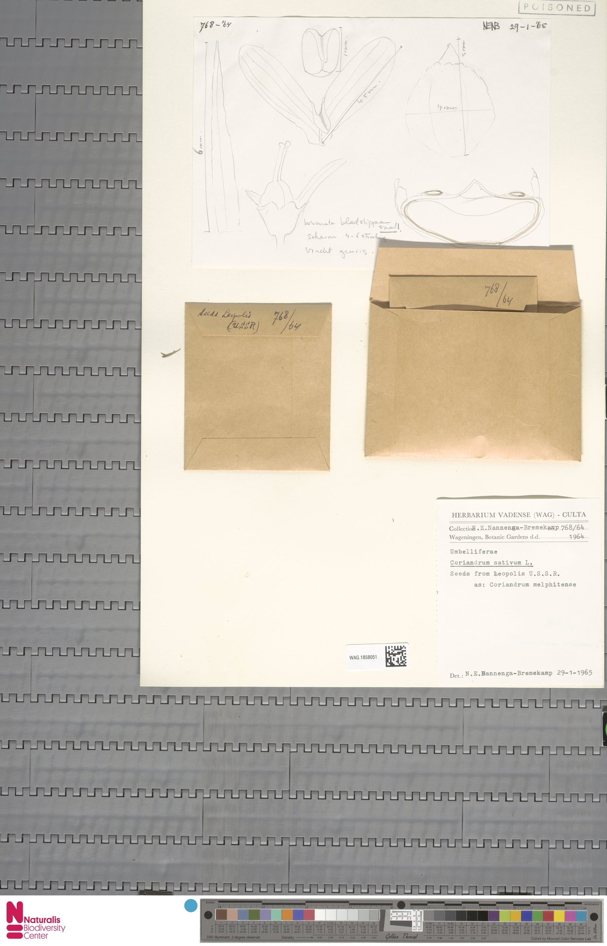 WAG.1858051 | Coriandrum sativum L.