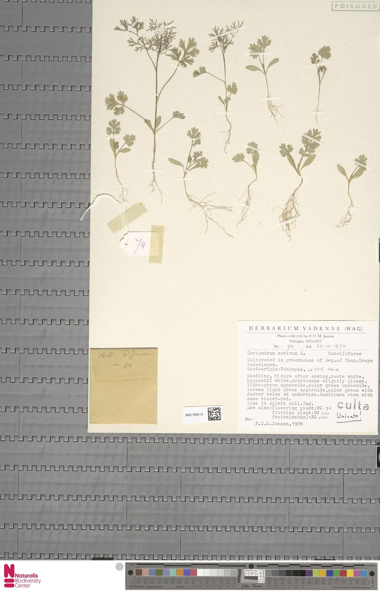 WAG.1858115   Coriandrum sativum L.