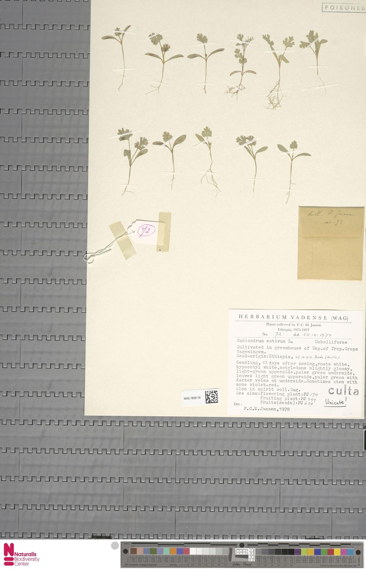 WAG.1858118 | Coriandrum sativum L.