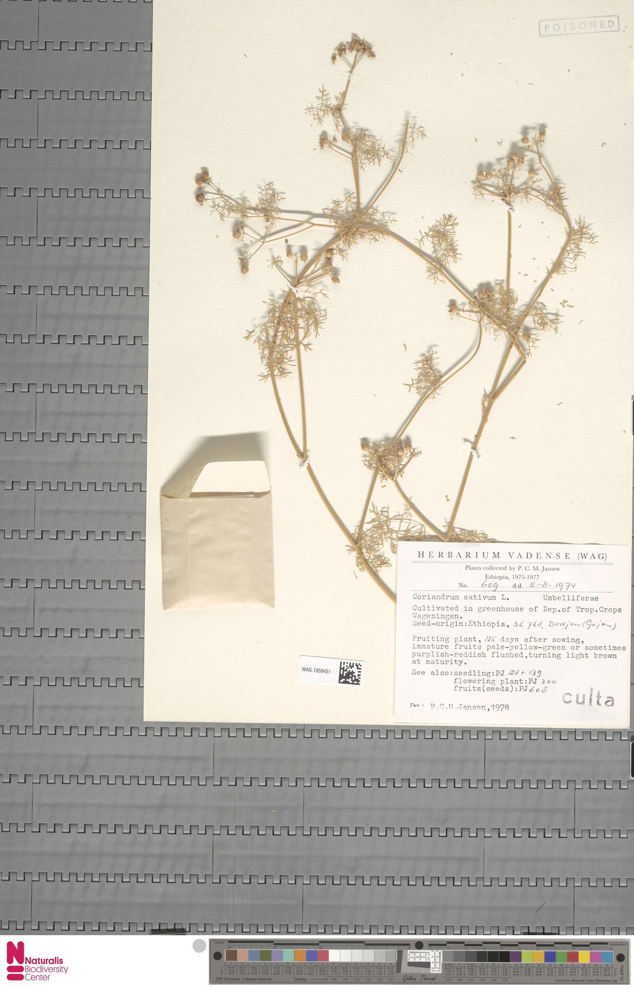 WAG.1858451 | Coriandrum sativum L.