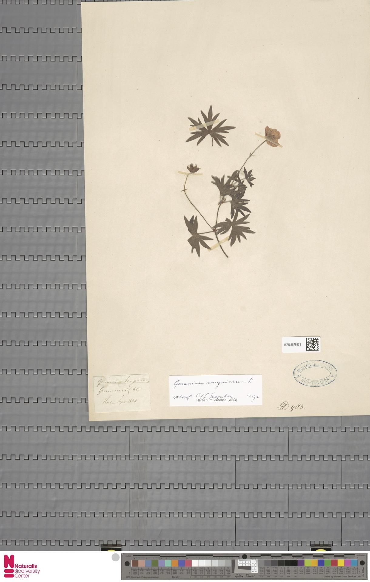 WAG.1876279 | Geranium sanguineum L.