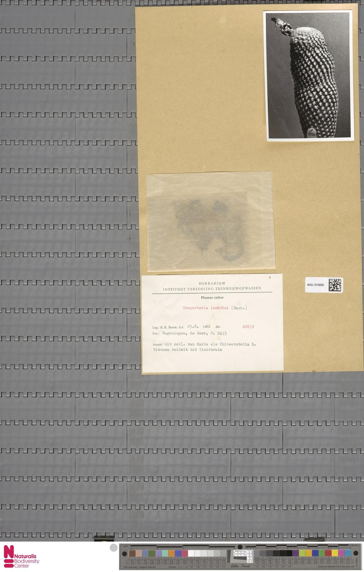 WAG.1919060 | Neoporteria lembckei S.Back