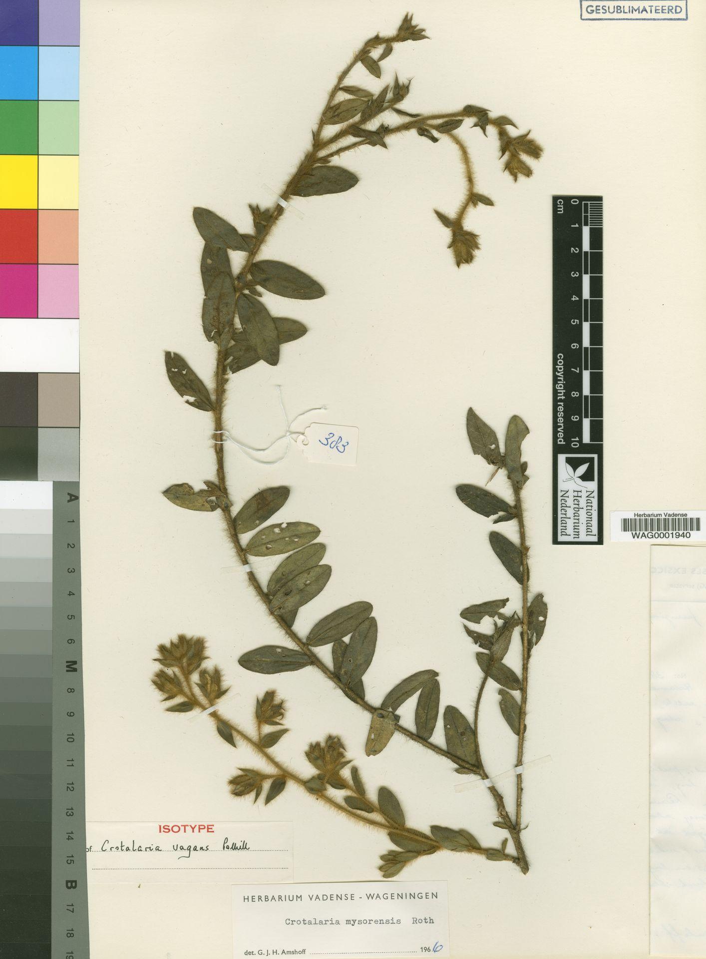 WAG0001940   Crotalaria vagans Polhill