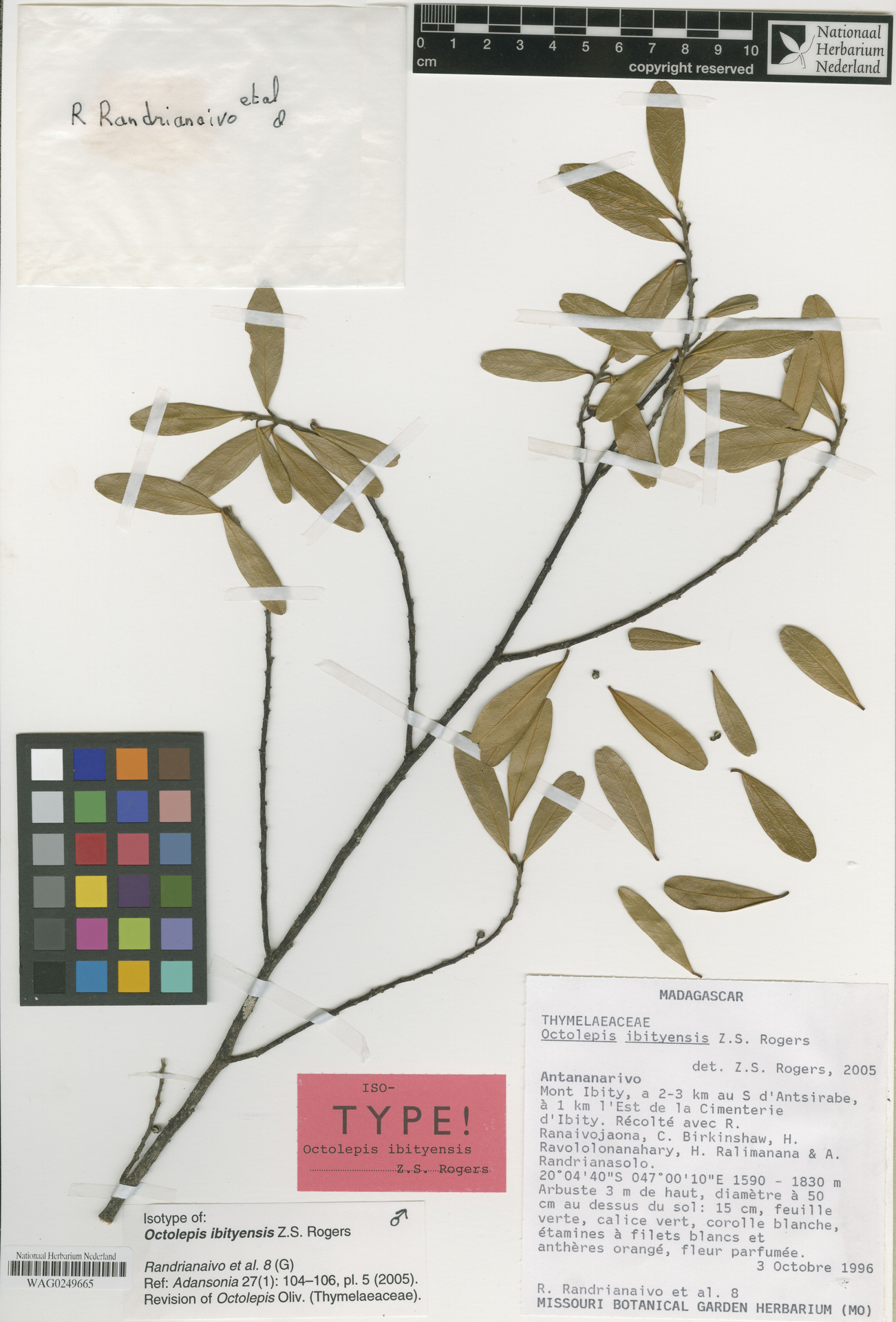 WAG0249665 | Octolepis ibityensis Z.S.Rogers