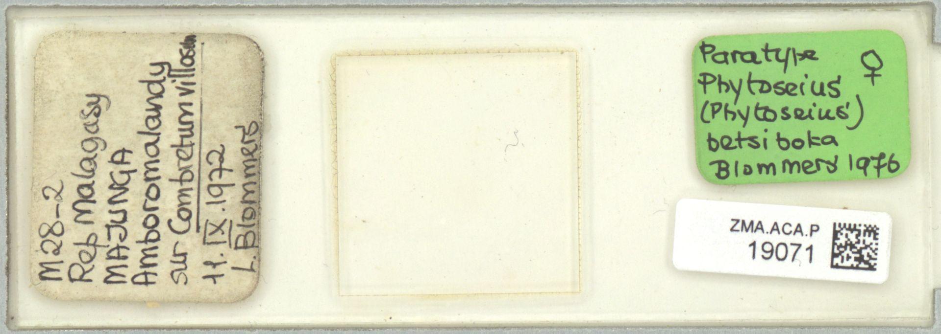 ZMA.ACA.P.19071   Phytoseius (Phytoseius) betsiboka Blommers, 1976