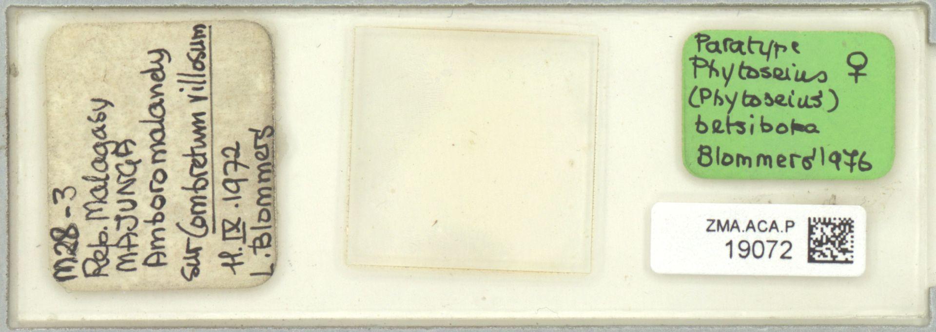 ZMA.ACA.P.19072 | Phytoseius (Phytoseius) betsiboka Blommers, 1976