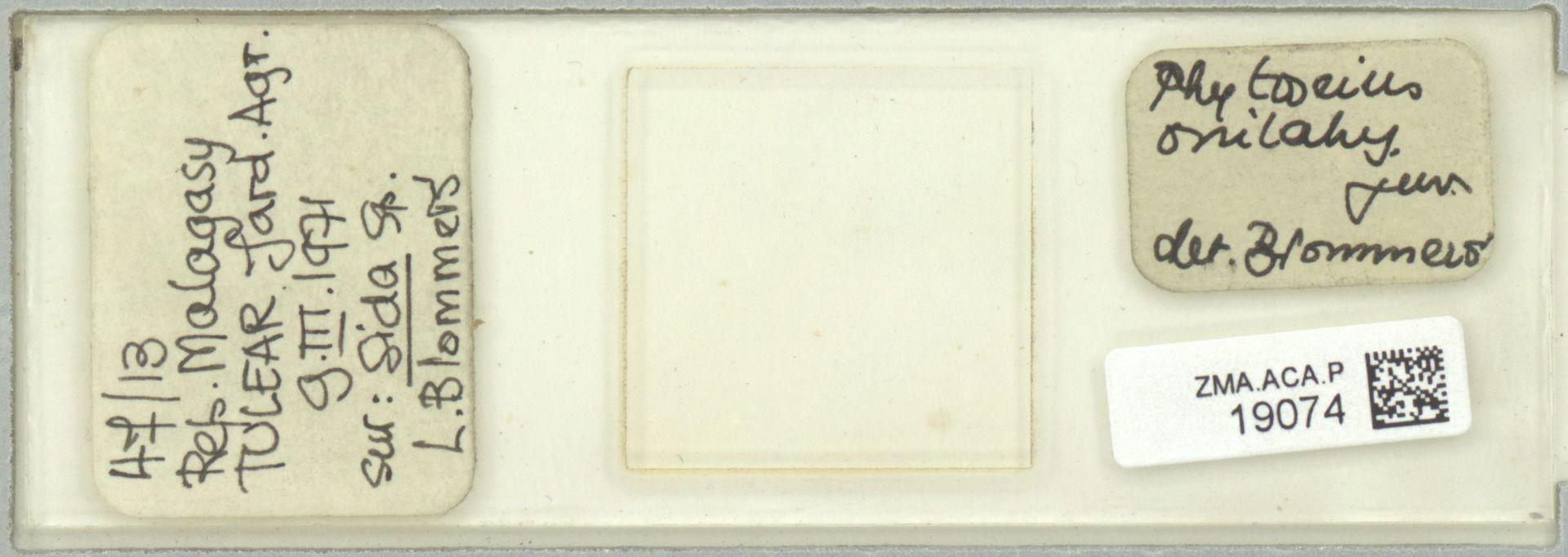 ZMA.ACA.P.19074 | Phytoseius (Phytoseius) onilahy Blommers