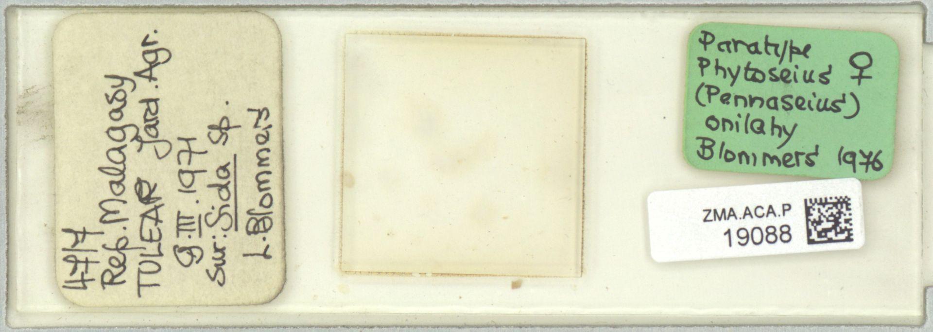 ZMA.ACA.P.19088 | Phytoseius (Pennaseius) onilahy Blommers, 1976