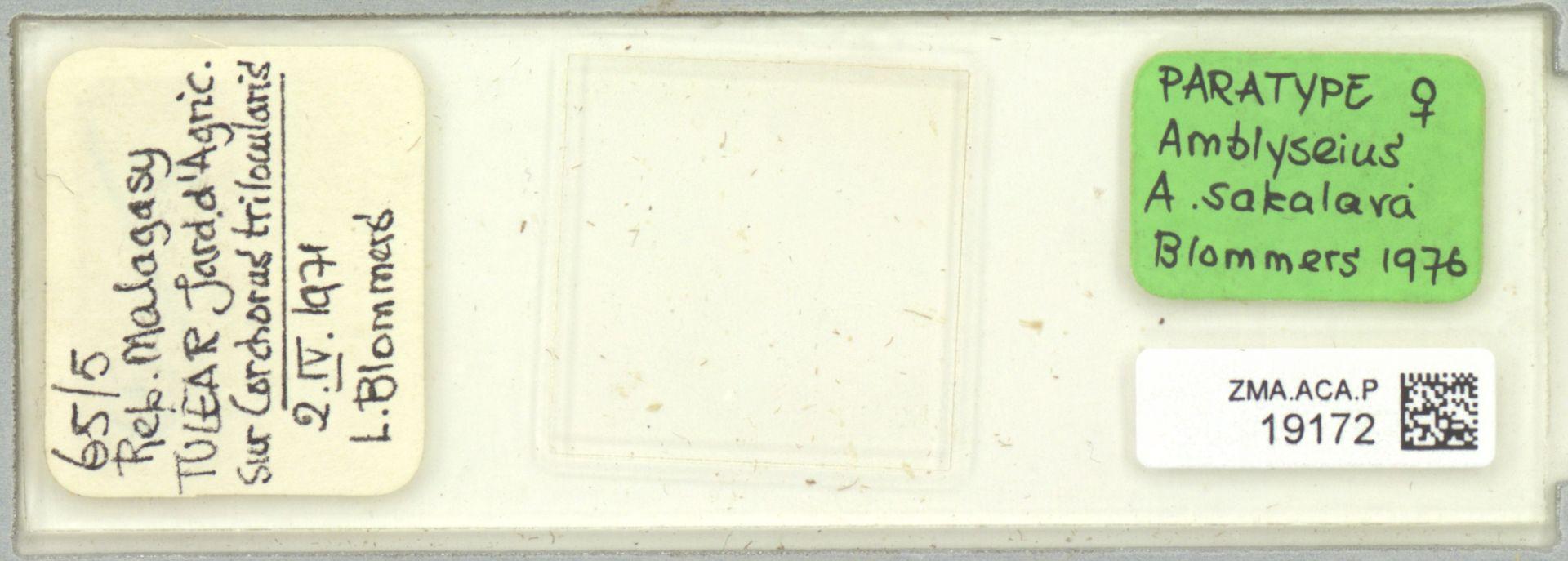 ZMA.ACA.P.19172   Amblyseius (Amblyseius) sakalava Blommers, 1976