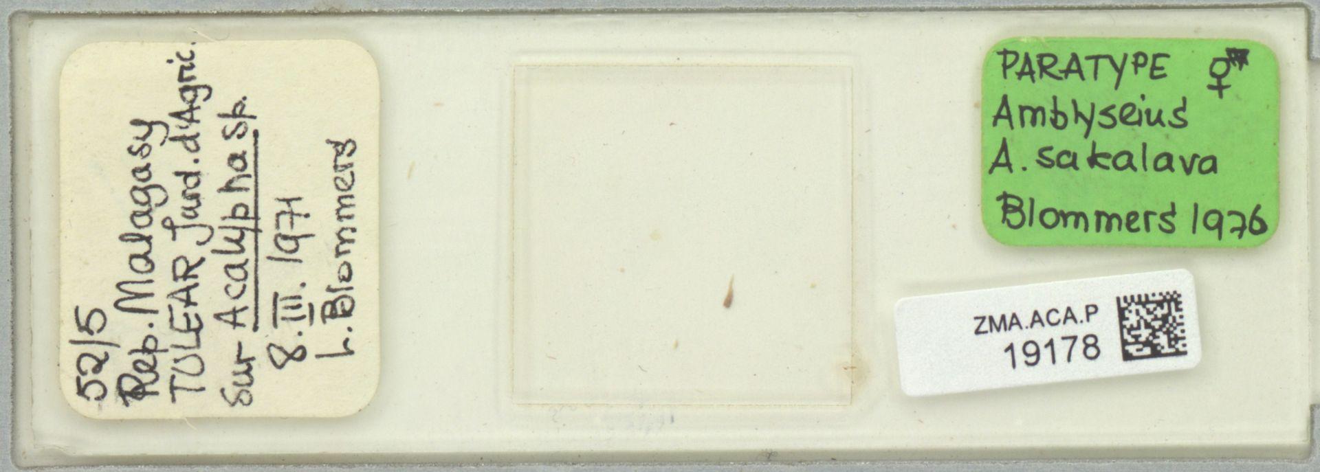 ZMA.ACA.P.19178 | Amblyseius (Amblyseius) sakalava Blommers, 1976