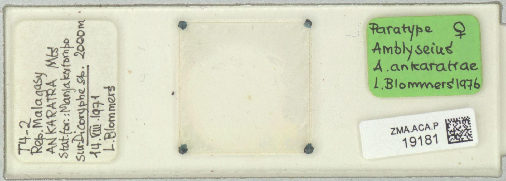 ZMA.ACA.P.19181 | Amblyseius (Amblyseius) ankaratrae Blommers, 1976