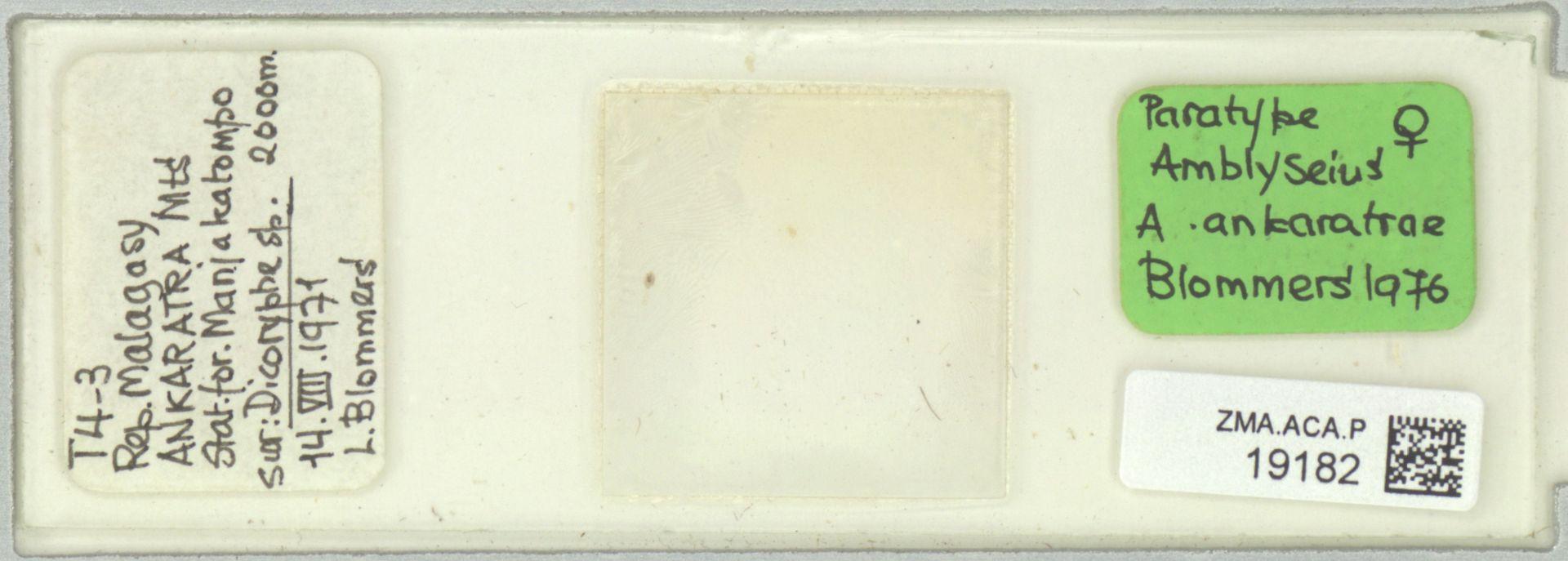 ZMA.ACA.P.19182 | Amblyseius (Amblyseius) ankaratrae Blommers, 1976