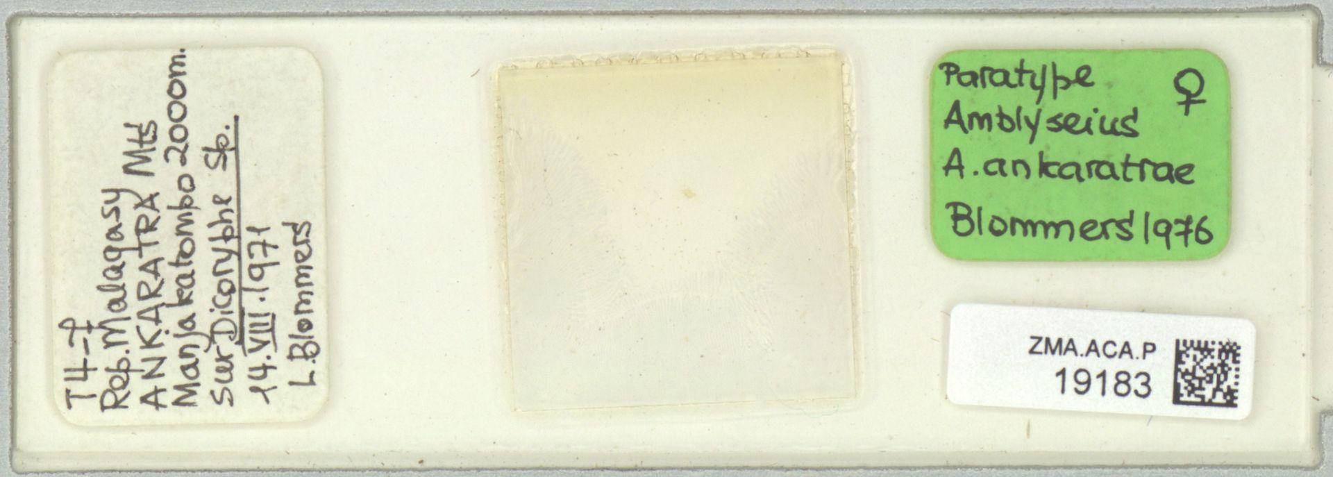 ZMA.ACA.P.19183 | Amblyseius (Amblyseius) ankaratrae Blommers, 1976