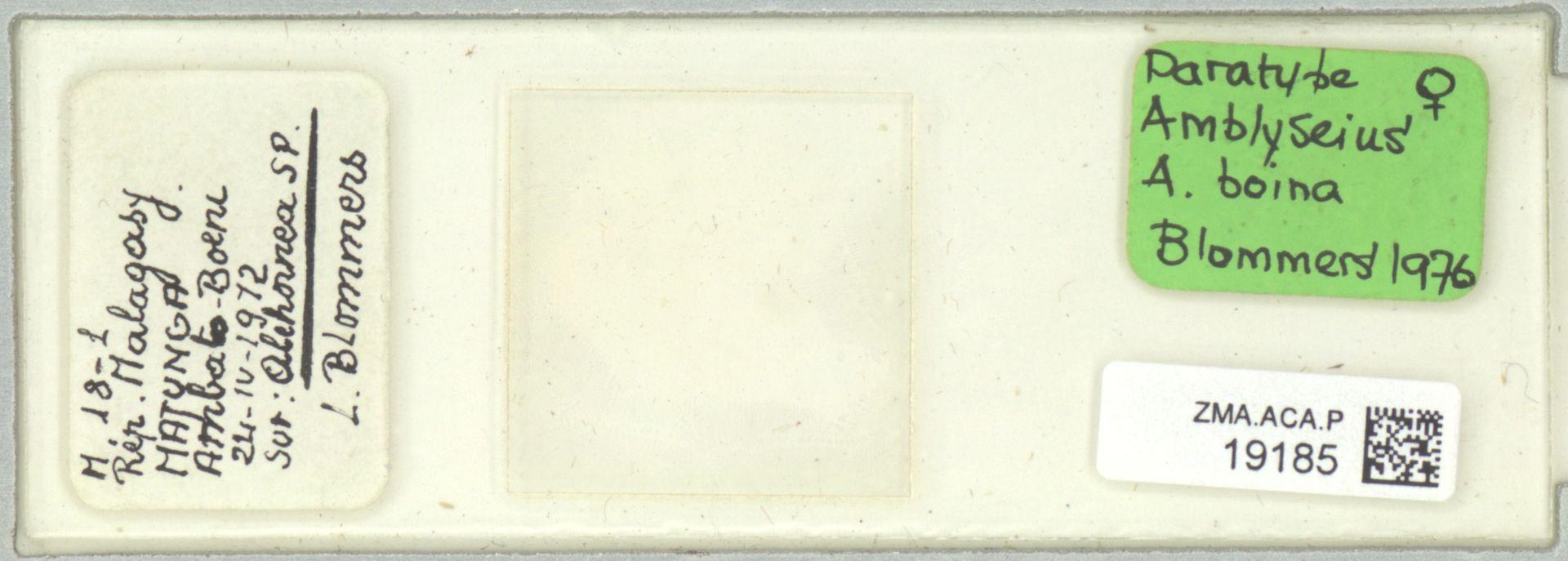 ZMA.ACA.P.19185 | Amblyseius (Amblyseius) boina Blommers, 1976