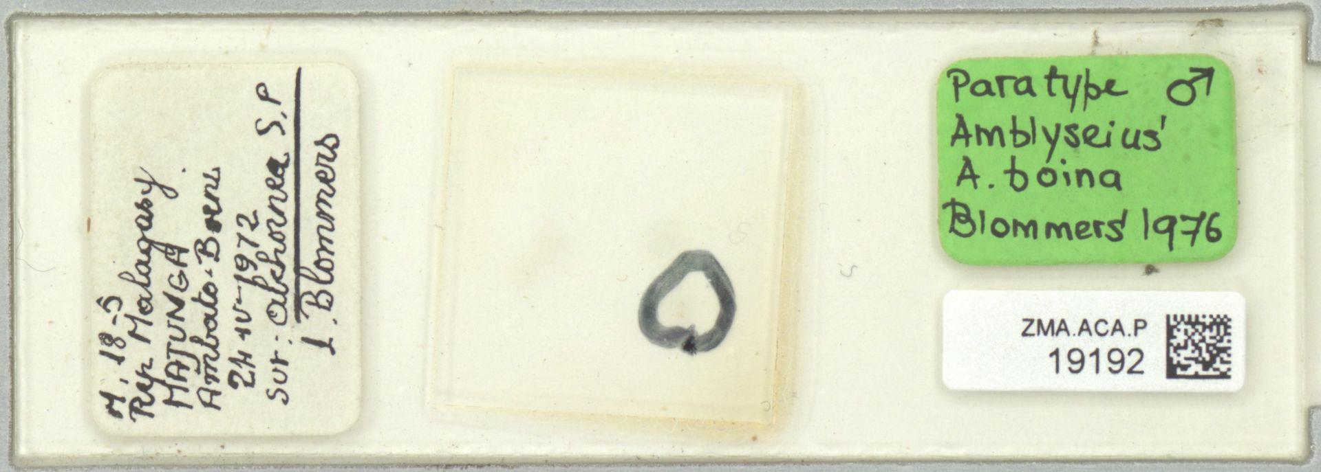 ZMA.ACA.P.19192 | Amblyseius (Amblyseius) boina Blommers, 1976