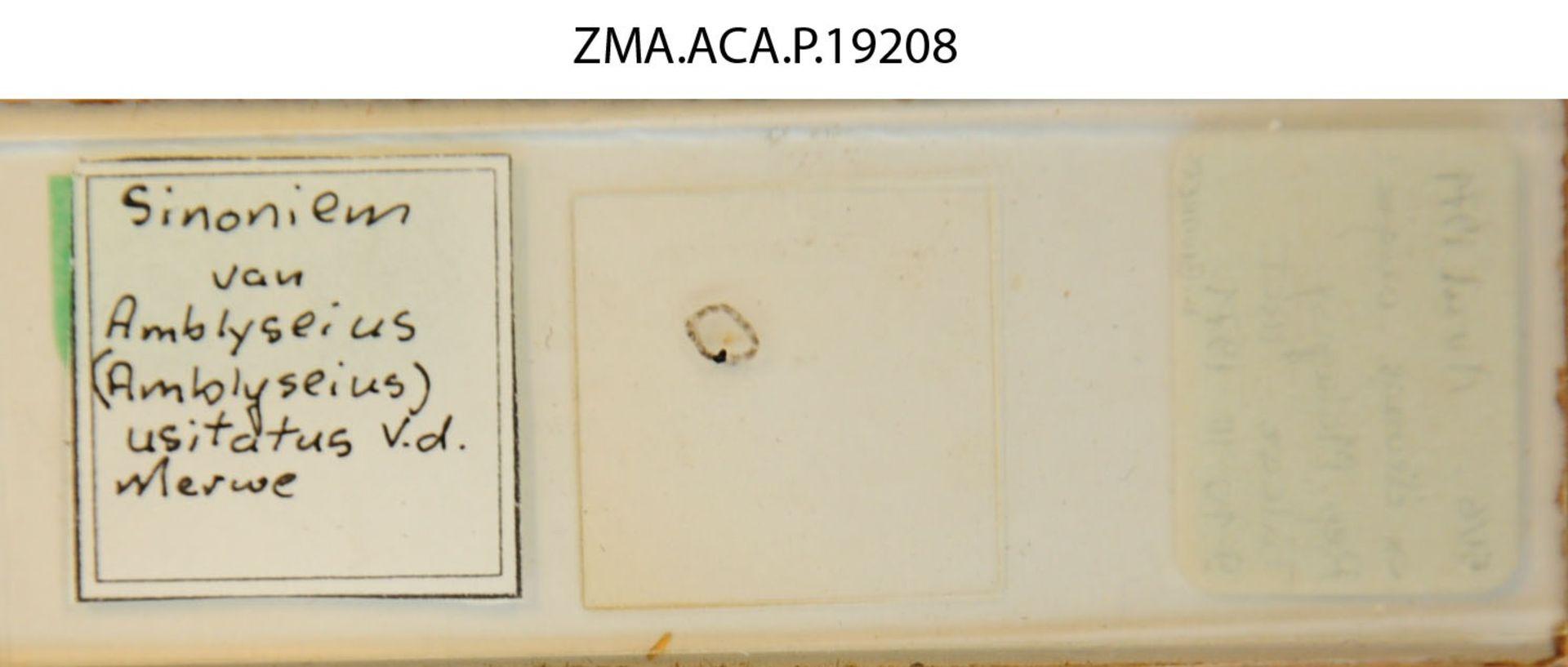 ZMA.ACA.P.19208 | Amblyseius (Amblyseius) masiaka Blommers & Chazeau, 1974