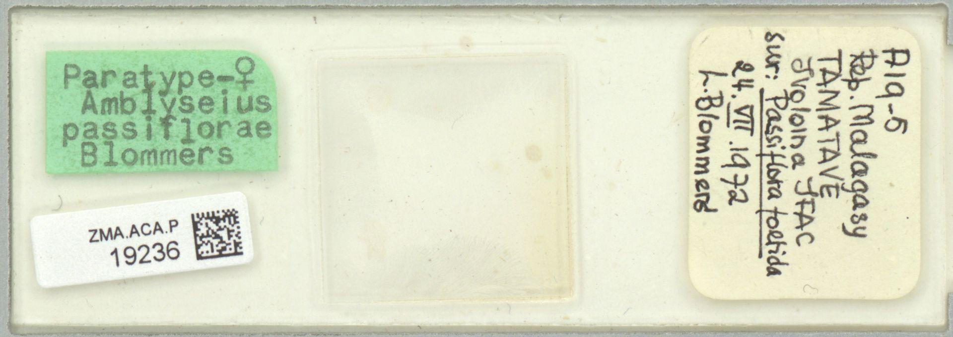 ZMA.ACA.P.19236   Amblyseius passiflorae Blommers
