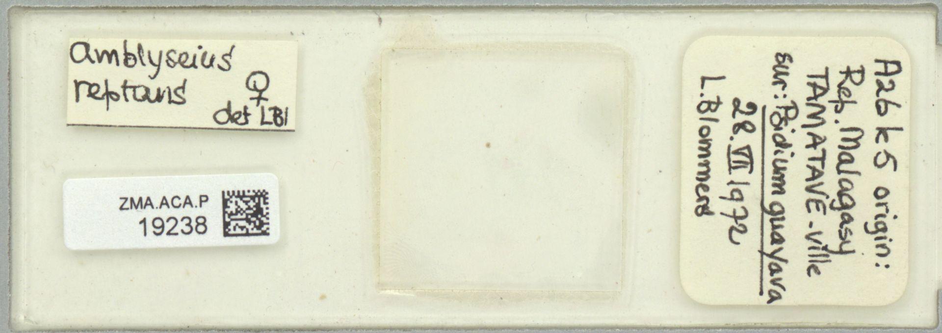 ZMA.ACA.P.19238 | Scapulaseius reptans (Blommers, 1974)
