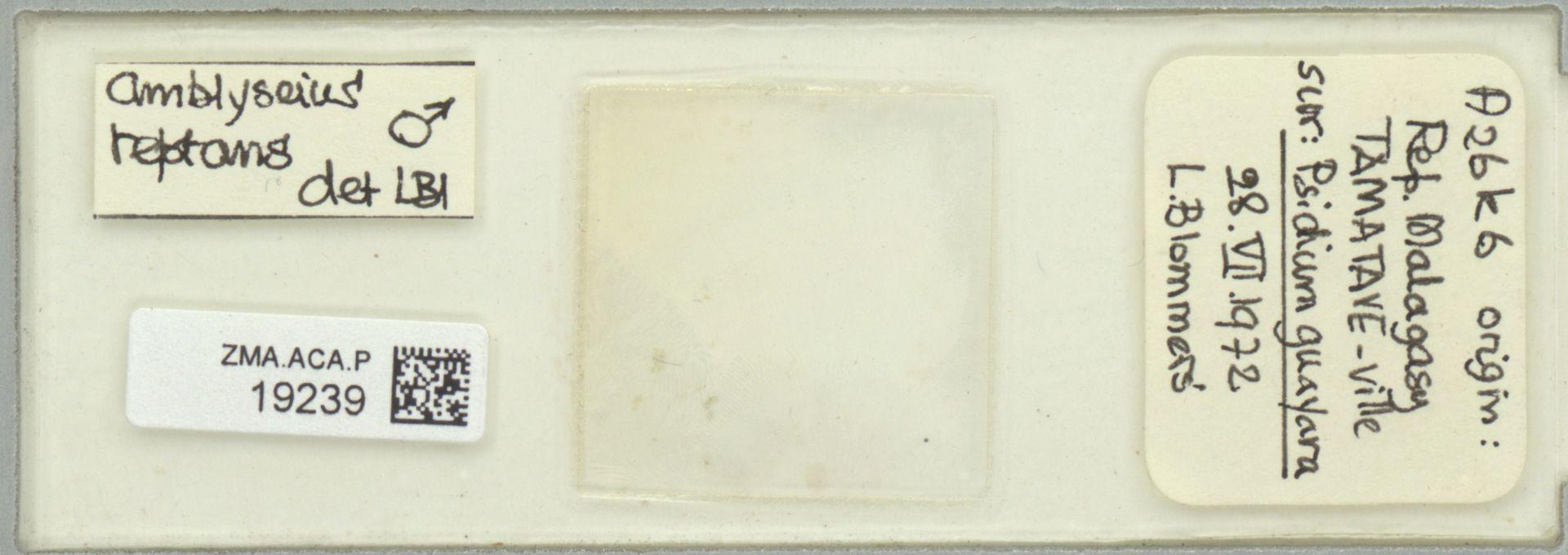 ZMA.ACA.P.19239 | Scapulaseius reptans (Blommers, 1974)