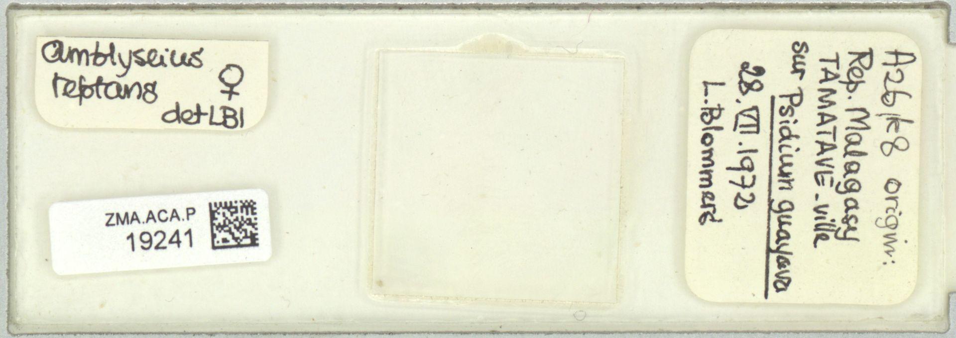 ZMA.ACA.P.19241 | Scapulaseius reptans (Blommers, 1974)