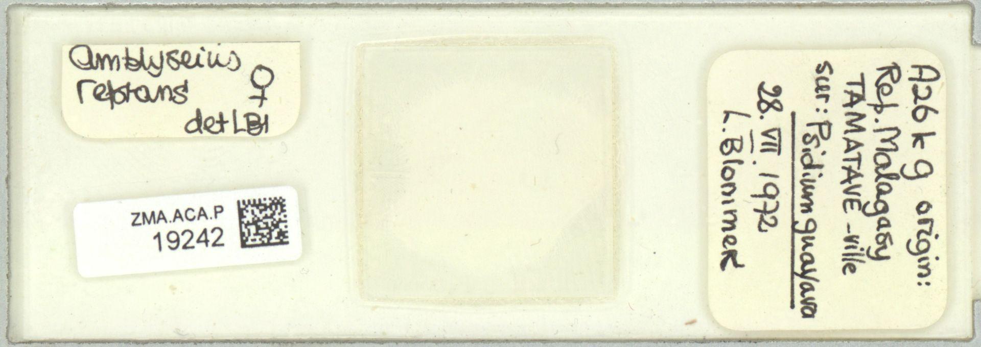 ZMA.ACA.P.19242   Scapulaseius reptans (Blommers, 1974)