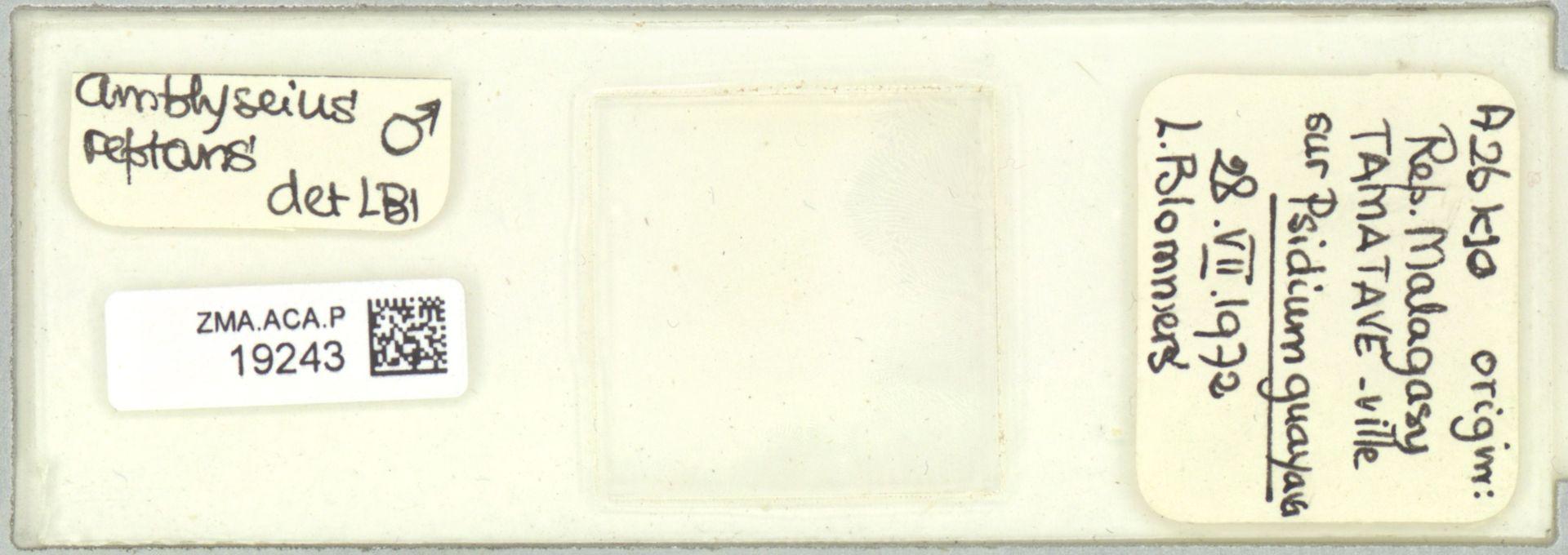 ZMA.ACA.P.19243   Scapulaseius reptans (Blommers, 1974)