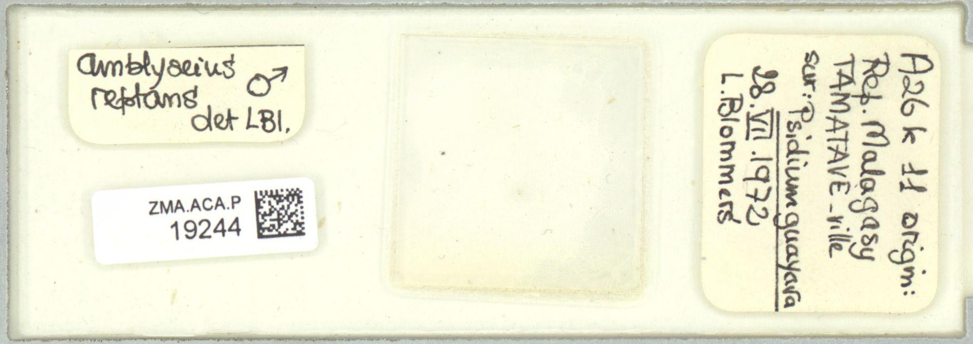 ZMA.ACA.P.19244 | Scapulaseius reptans (Blommers, 1974)