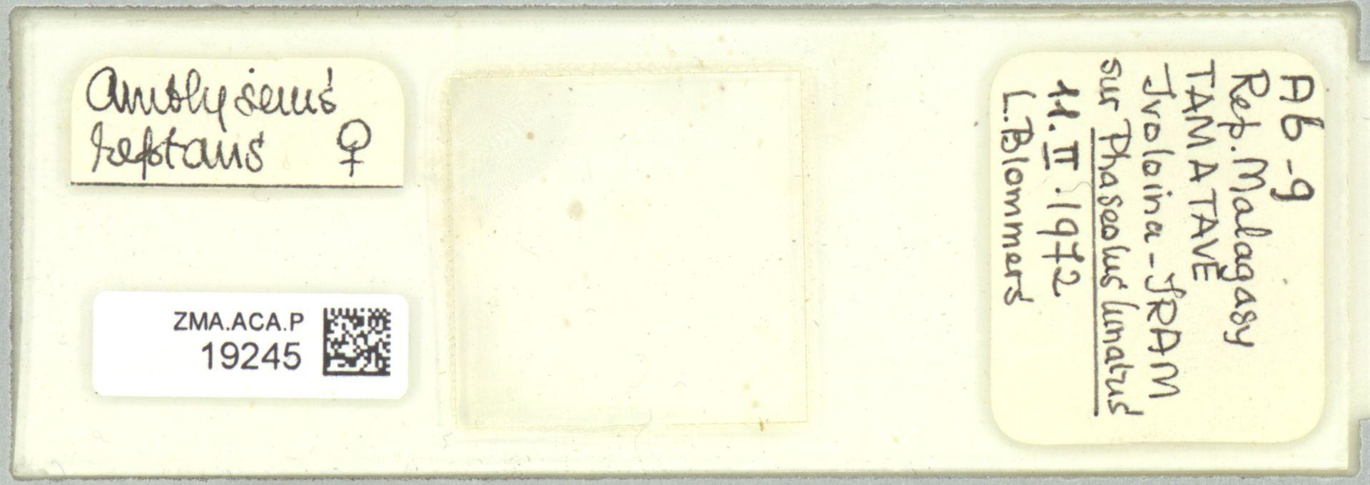ZMA.ACA.P.19245   Scapulaseius reptans (Blommers, 1974)