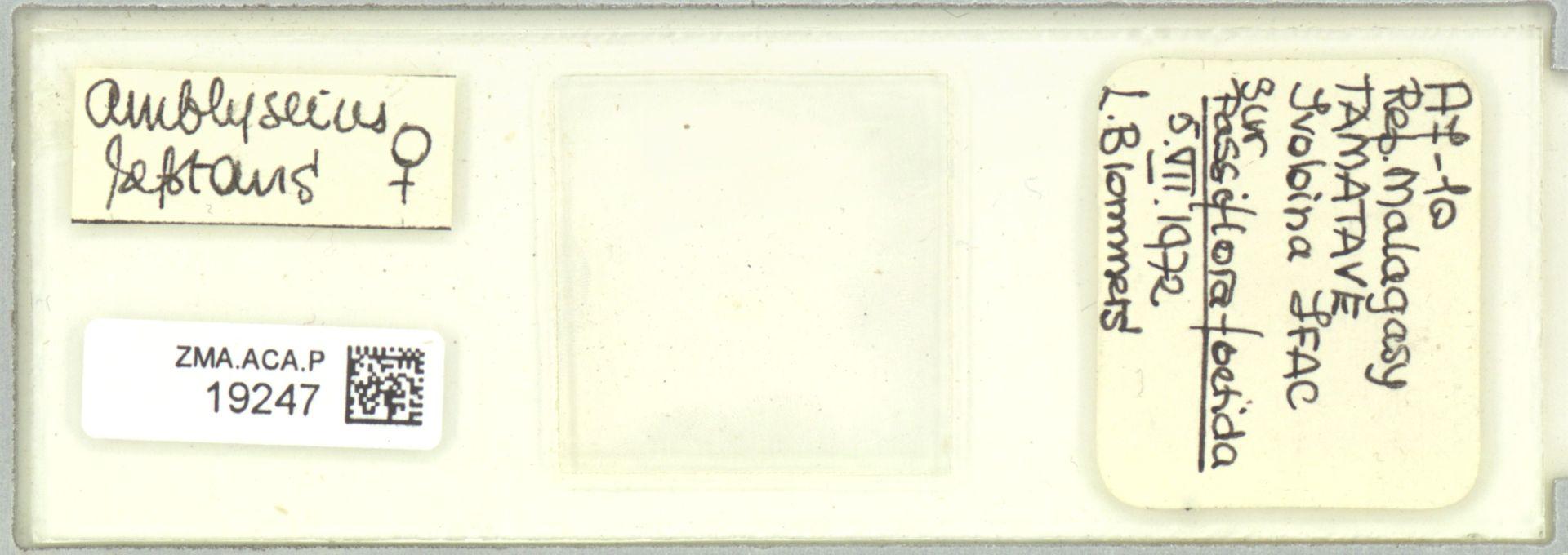 ZMA.ACA.P.19247   Scapulaseius reptans (Blommers, 1974)