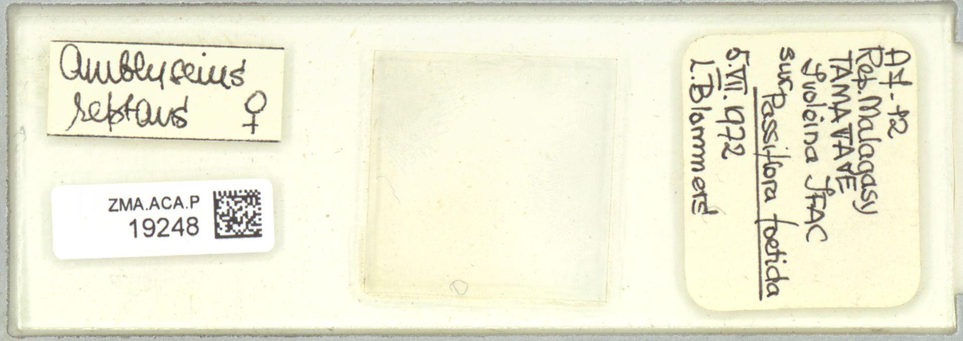 ZMA.ACA.P.19248   Scapulaseius reptans (Blommers, 1974)