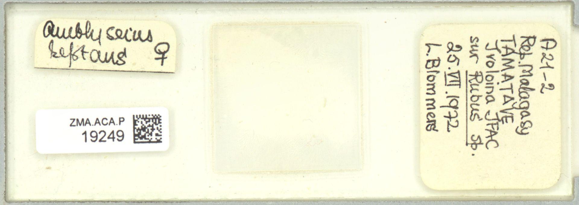 ZMA.ACA.P.19249 | Scapulaseius reptans (Blommers, 1974)