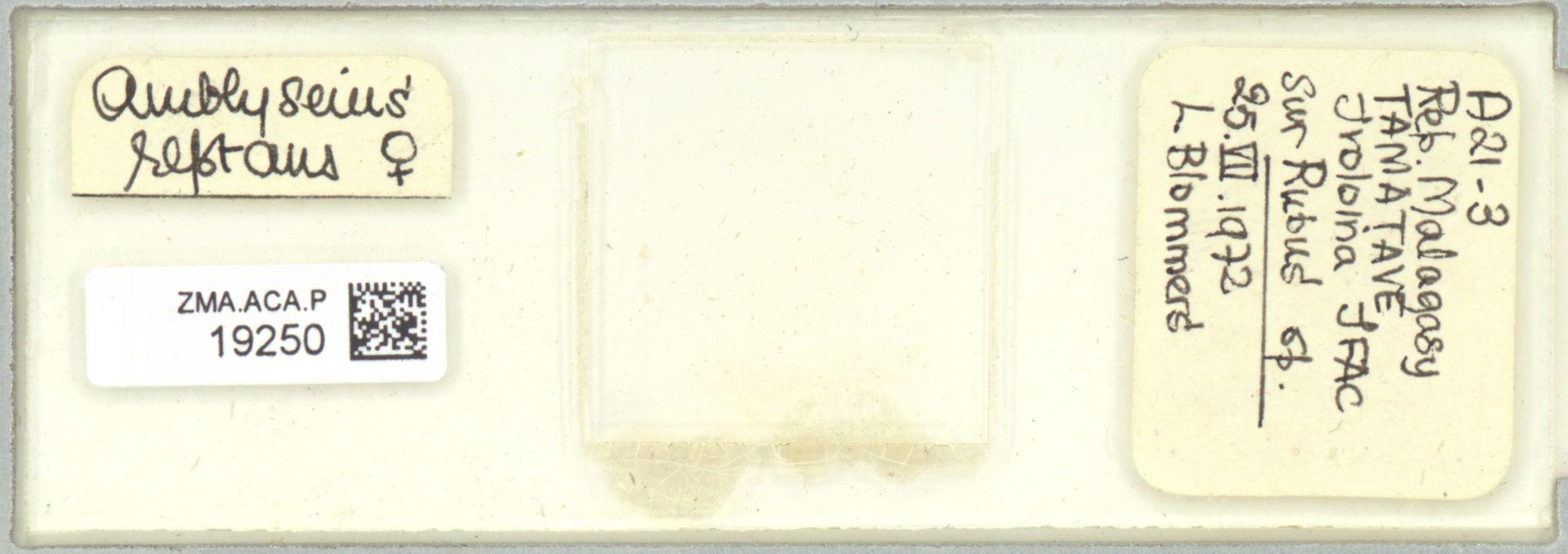 ZMA.ACA.P.19250 | Scapulaseius reptans (Blommers, 1974)