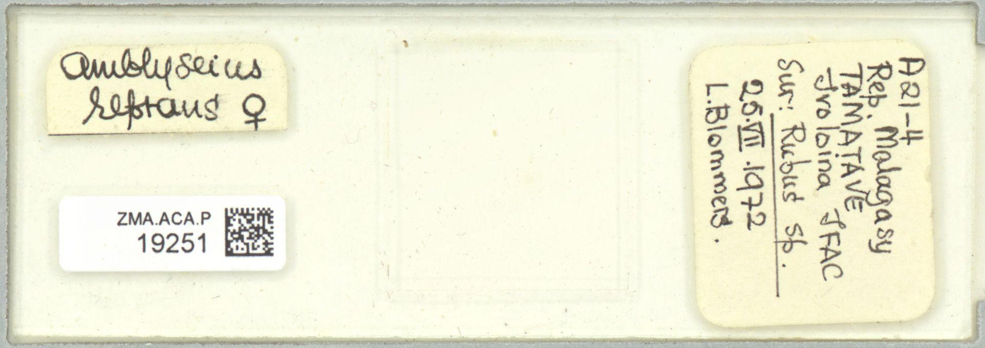 ZMA.ACA.P.19251 | Scapulaseius reptans (Blommers, 1974)