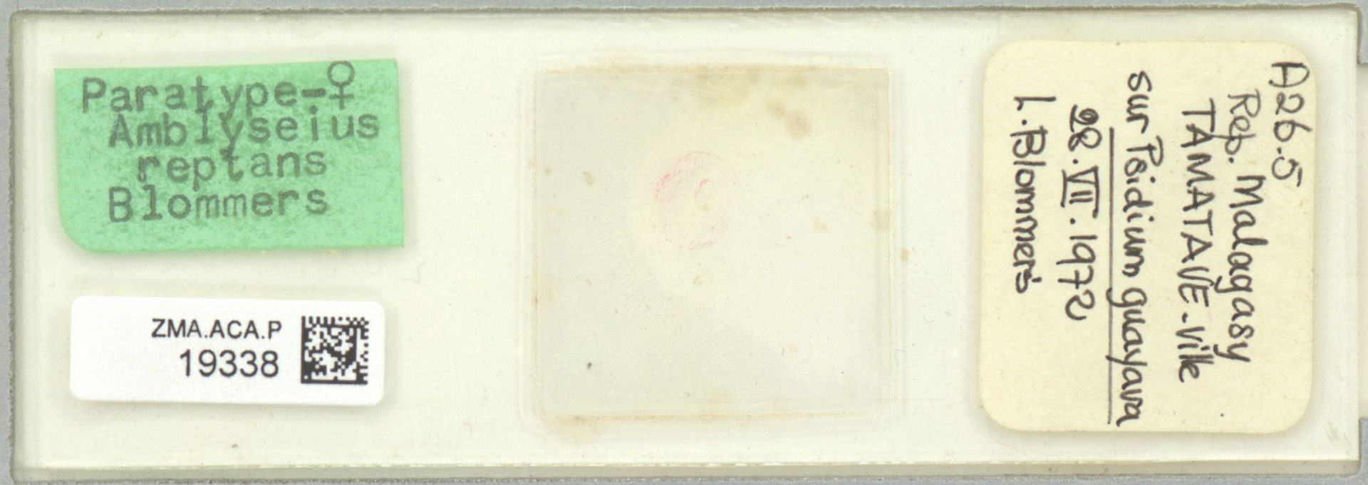 ZMA.ACA.P.19338 | Amblyseius reptans Blommers, 1974