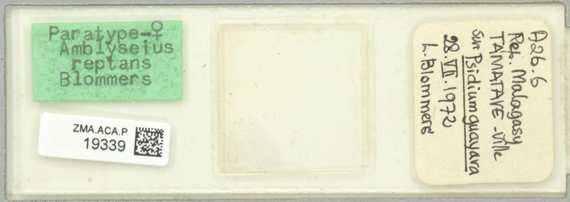 ZMA.ACA.P.19339 | Amblyseius reptans Blommers, 1974