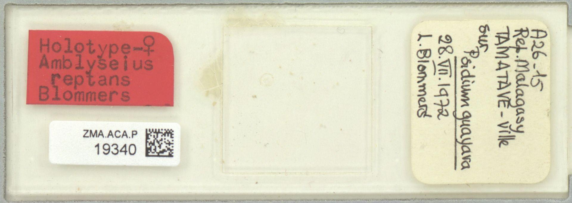 ZMA.ACA.P.19340 | Scapulaseius reptans (Blommers, 1974)