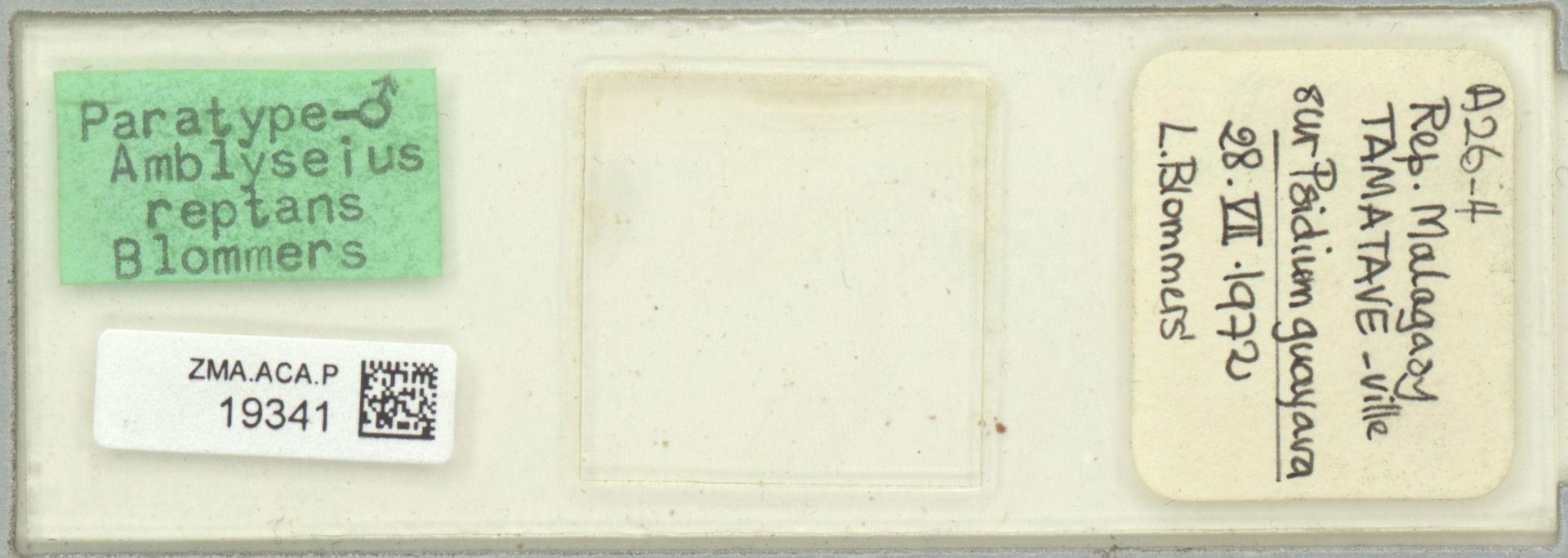 ZMA.ACA.P.19341 | Amblyseius reptans Blommers, 1974