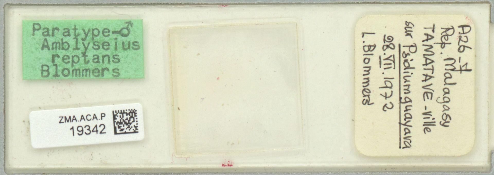 ZMA.ACA.P.19342 | Amblyseius reptans Blommers, 1974