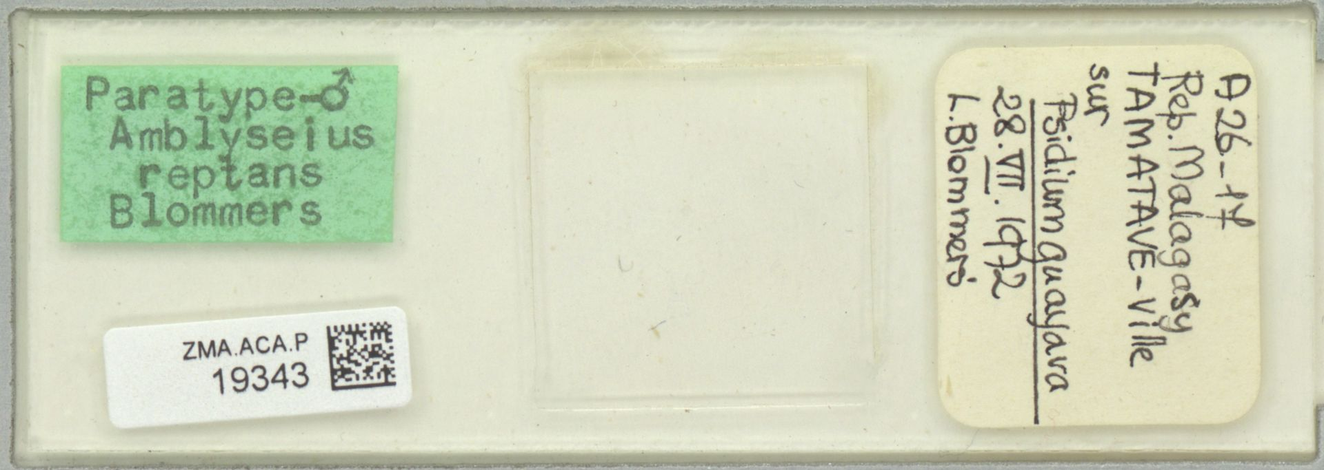 ZMA.ACA.P.19343 | Amblyseius reptans Blommers, 1974