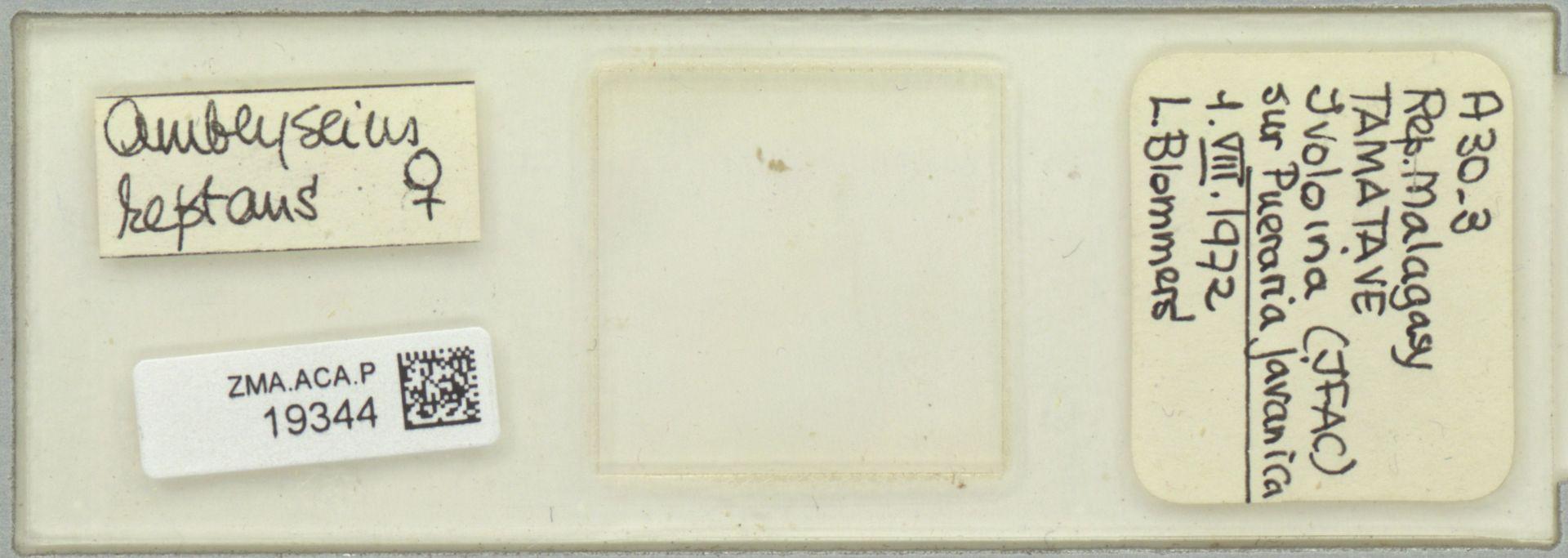 ZMA.ACA.P.19344 | Scapulaseius reptans (Blommers, 1974)