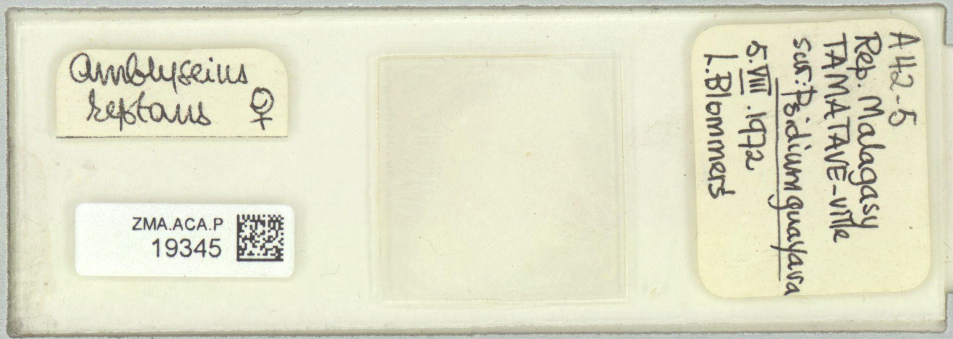 ZMA.ACA.P.19345 | Scapulaseius reptans (Blommers, 1974)