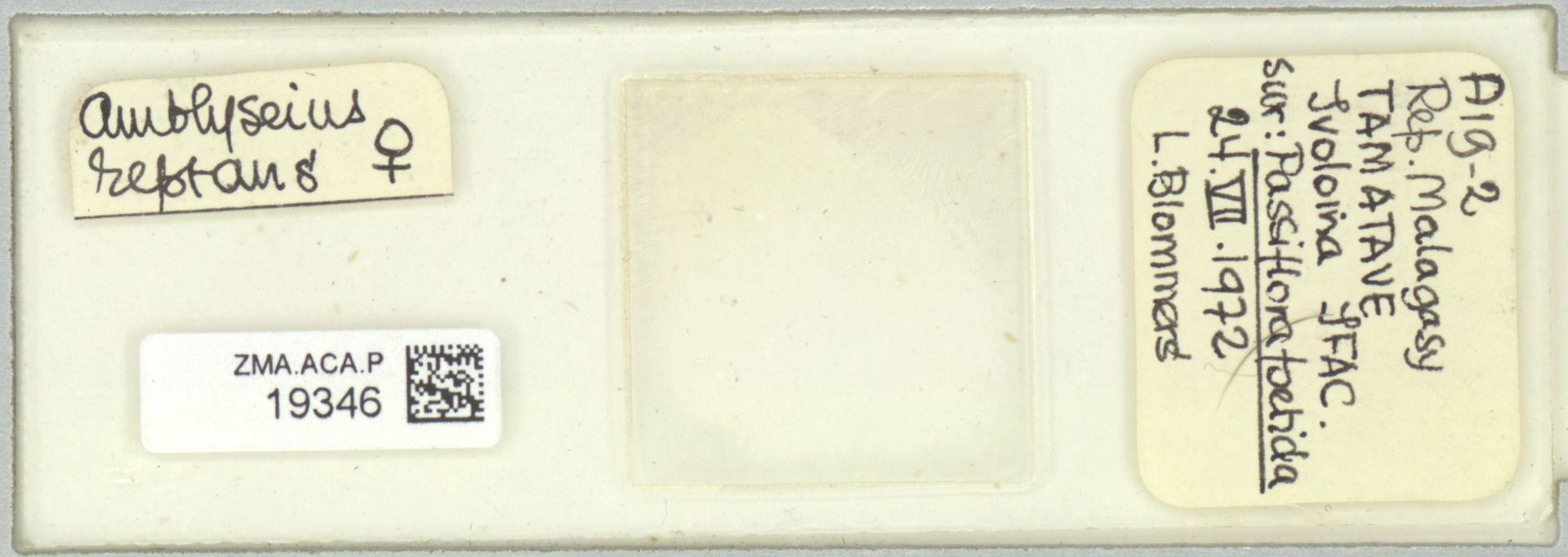 ZMA.ACA.P.19346 | Scapulaseius reptans (Blommers, 1974)