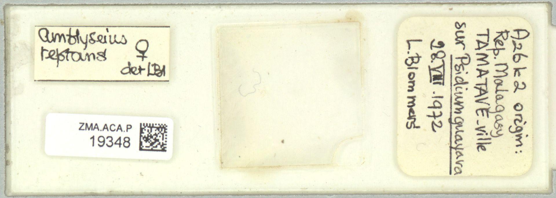ZMA.ACA.P.19348 | Scapulaseius reptans (Blommers, 1974)