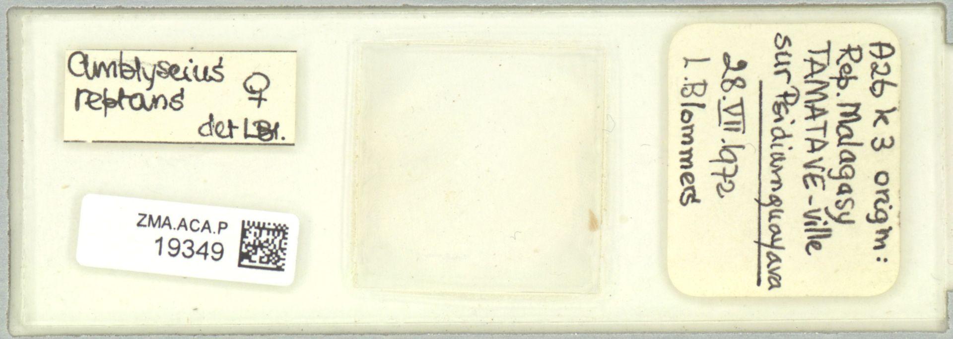 ZMA.ACA.P.19349   Scapulaseius reptans (Blommers, 1974)