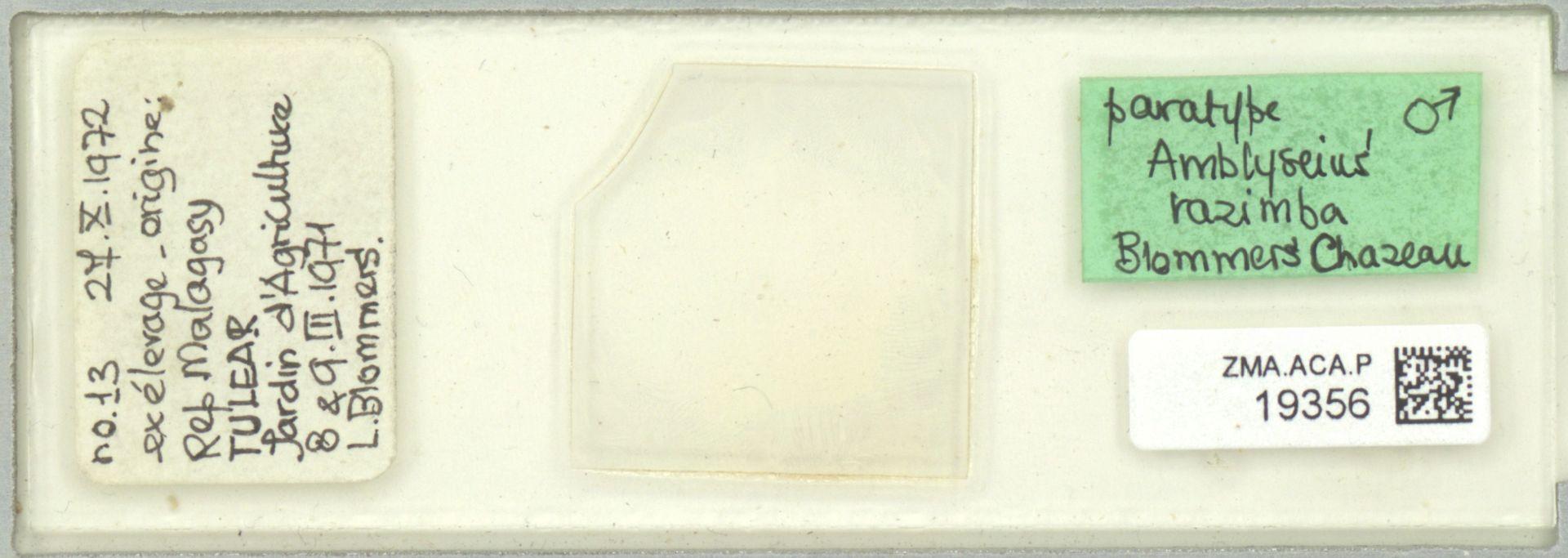 ZMA.ACA.P.19356 | Amblyseius razimba Blommers & Chazeau